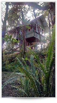 Brent Norris Treehouse in Hawaii